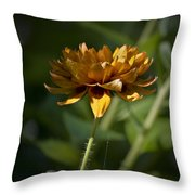 Orange Blanket Flower Throw Pillow