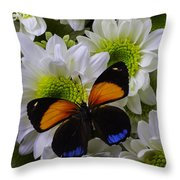 Orange Blue Butterfly On Poms Throw Pillow