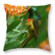 Orange-breasted Sunbird Feeding On Protea Blossom Throw Pillow