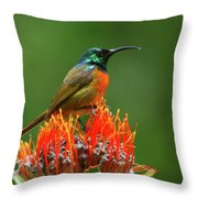 Orange-breasted Sunbird On Protea Blossom Throw Pillow