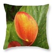 Orange Calla Mix Throw Pillow