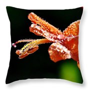Orange Cape Honeysuckle Bush Blossom Throw Pillow
