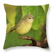 Orange Crowned Warbler Throw Pillow