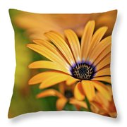 Orange Crush Throw Pillow