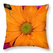 Orange Crush Daisy Throw Pillow
