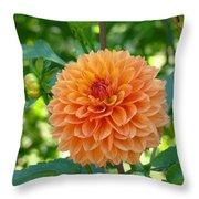 Orange Dahlia Master Gardeners Art Collection Baslee Troutman Throw Pillow