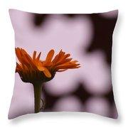 Orange Daisey Throw Pillow