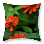 Orange Daisey's Throw Pillow