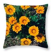 Orange Daisies--film Image Throw Pillow