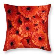 Orange Daisies Throw Pillow
