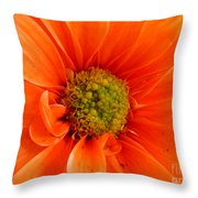 Orange Daisy - A Center View Throw Pillow