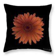 Orange Daisy Front Throw Pillow