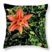 Orange Day Lily 1 Throw Pillow