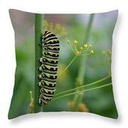 Orange Dot Caterpillar Throw Pillow