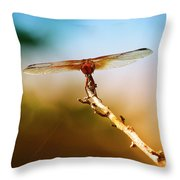 Orange Dragonfly Wings I Throw Pillow