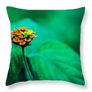 Orange Flower Iv Throw Pillow
