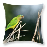 Orange-fronted Parakeet Throw Pillow