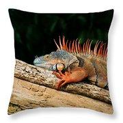 Orange Iguana Close Up Throw Pillow