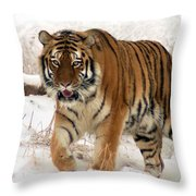 Orange In Winter Throw Pillow