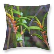 Orange Kangaroo Paw Throw Pillow