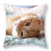 Orange Kitten Throw Pillow