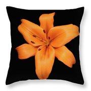 Orange Lily On Black Throw Pillow