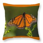 Orange Monarch Throw Pillow