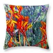 Yellow-orange Kangaroo Paws At Pilgrim Place In Claremont-california- Throw Pillow