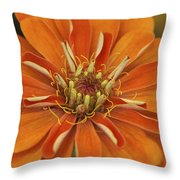 Orange Orange Orange Throw Pillow