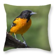 Orange Oriole Throw Pillow
