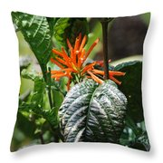 Orange Plants Throw Pillow