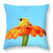 Orange Pop Flower Cafe Throw Pillow