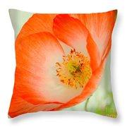 Orange Poppy Offering Nectar Throw Pillow