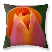 Orange Raspberry Sherbet Tulip Throw Pillow