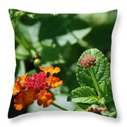 Orange  Red Flowers Throw Pillow