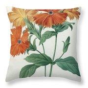 Orange Rose Campion Throw Pillow
