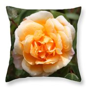 Orange Rose Square Throw Pillow