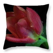 Orange Ruby Tulip Throw Pillow by Tracy Hall