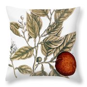 Orange Tree, 1735 Throw Pillow