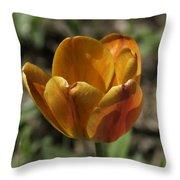 Orange Tulip Squared Throw Pillow
