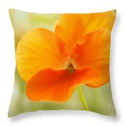 Orange Viola On A Brilliant Spring Day Throw Pillow