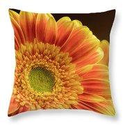 Orange Yellow Gerbera Throw Pillow