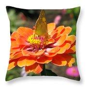 Orange Zennia Throw Pillow