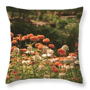 Orangeade Throw Pillow