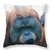 Orangutan Kiss Throw Pillow