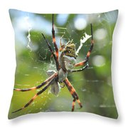 Orb Weaver Spider And Prey In A Web Throw Pillow