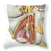 Orbital Cut Showing Abducent Nerve Throw Pillow