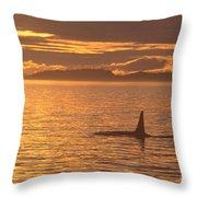 Orca Killer Whale Throw Pillow