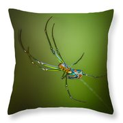 Lone Orchard Orbweaver Throw Pillow