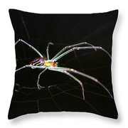 Orchard Orbweaver Spider Throw Pillow